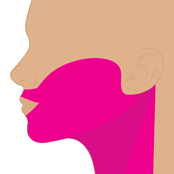 Cara y Cuello