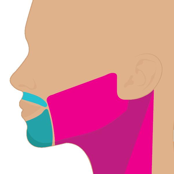 Cara + Cuello no labio o no mentón